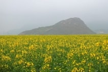 1351273311_rapeseed-feelds-luoping-china-7.jpg